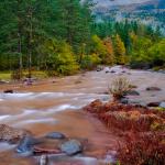 Bosques para visitar en Huesca