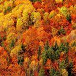 colores de otoño en ordesa